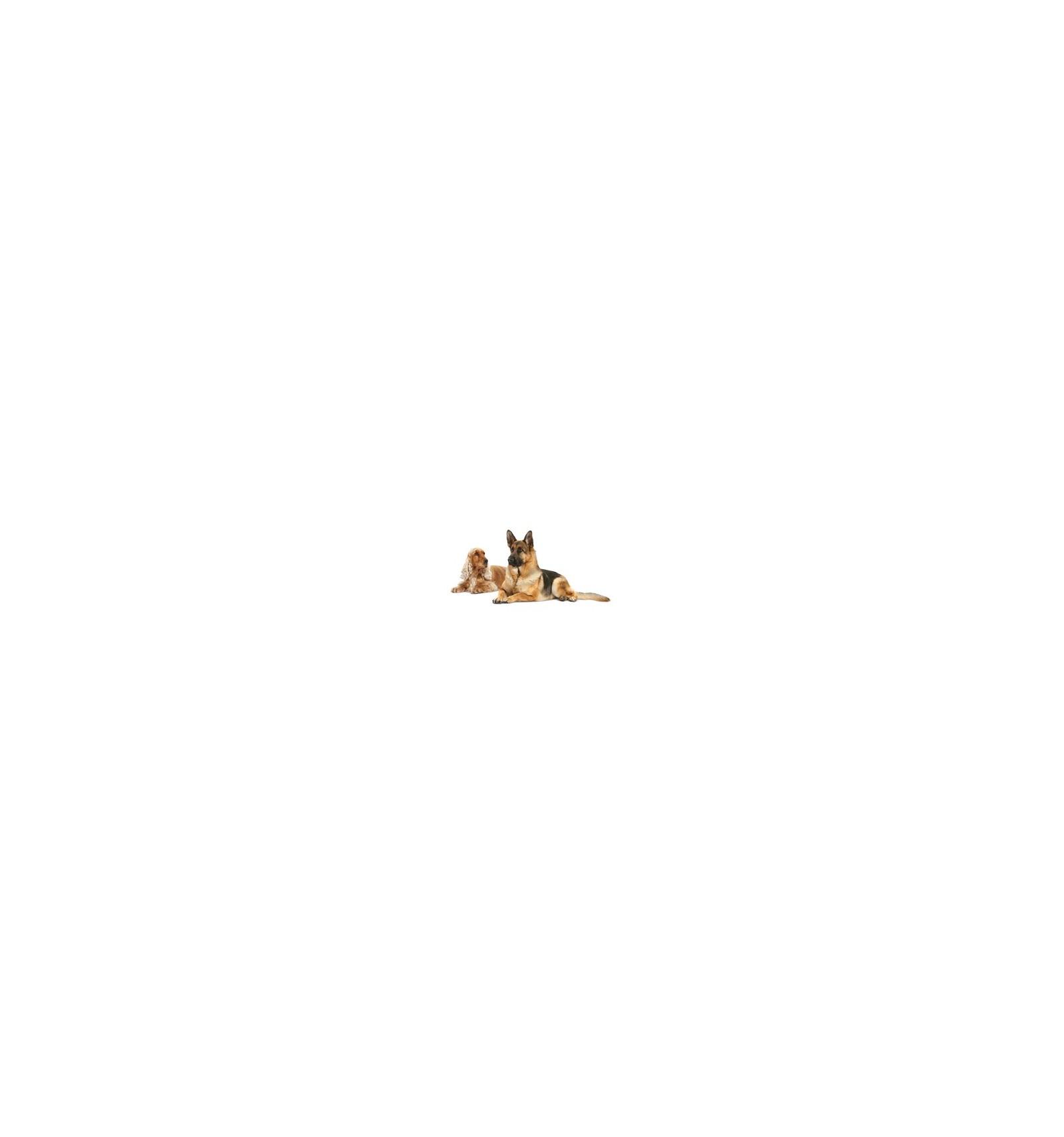 Проплан или Роял Канин — какой корм лучше для собак и кошек