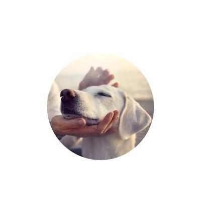 Shampô Douxo Calm p/ Cães e Gatos 200ml