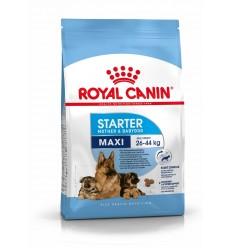 Royal Canin Maxi Starter, Cão, Seco, Adulto, Alimento/Ração